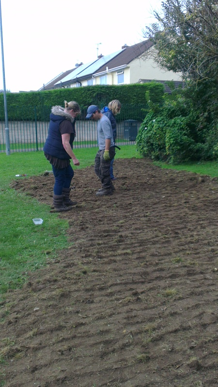 Volunteers Preparing ground for wild flower seeds